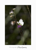 08 2017 MG_0087 Digne jardin p.jpg