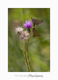 08 2017 IMG_0241 Digne jardin papillon.jpg