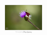 08 2017 IMG_0264 Digne jardin papillon.jpg