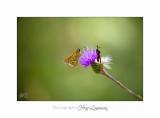 08 2017 IMG_0268 Digne jardin papillon.jpg