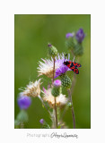 08 2017 IMG_0274 Digne jardin papillon.jpg