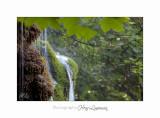 08 2017 IMG_0292 Digne jardin papillon.jpg