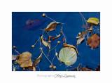 08 2017 IMG_0298 Digne jardin papillon.jpg