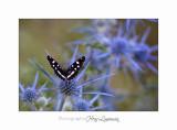 08 2017 IMG_0328 Digne jardin papillon.jpg