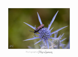 IMG_0341 Digne jardin papillon.jpg