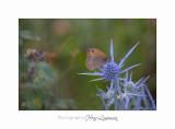08 2017 IMG_0352 Digne jardin papillon.jpg