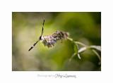 08 2017 IMG_0379 Digne jardin papillon.jpg