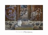 2017 10 IMG_1660 Chat Automne Saint Dalmas.jpg