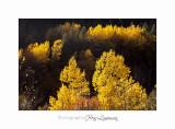 2017 10 IMG_1735 couleur automne.jpg