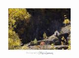 2017 10 IMG_1741 automne St Dalmas.jpg