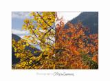 2017 10 Montage 1644 1645 automne.jpg