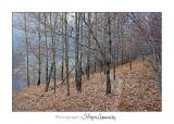 2017 10 _MG_3900 automne arbre.jpg