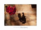 2017 10 IMG_0876 Italie hanbury jardin fleurs.jpg
