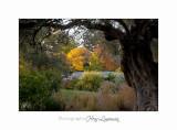 2017 10 IMG_2160 arbre automne PHOENIX.jpg