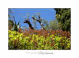 IMG_0598 Italie hanbury jardin fleurs.jpg