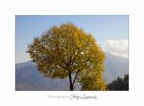 2017 12 IMG_2043 arbre automne sospel.jpg