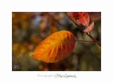 IMG_2318 Phoenix jardin.jpg