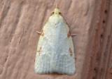 3725 - Cenopis pettitana; Maple Basswood Leafroller