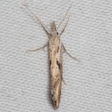 2352 (Euceratia securella)