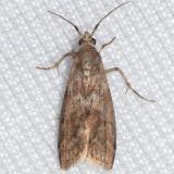 5767 Oreana unicolorella