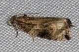 2821 Serviceberry Leafroller (Olethreutes appendiceum)