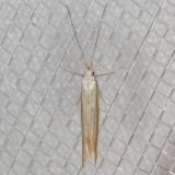 1396.97 Coleophora sp.