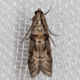 5727 (Promylea lunigerella)
