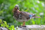 Post Card for Reifel Bird Sanctuary