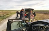 Looking for Pallid Harrier