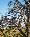 Shaniko Shoe Tree