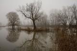 De Biesbosch