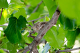 Hummingbird Nest 2017