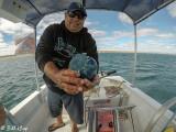 Canonball Jellyfish  3