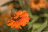 Flowers Sonoma  3