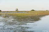 Delta Weeds  4