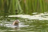 River Otter  2018 2