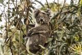 Australia Wanderings