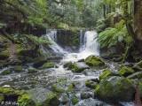 Mt. Field Waterfall  1