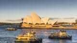 Sydney Harbor  14