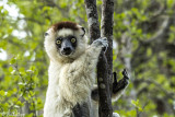 Wildlife & Nature of Madagascar
