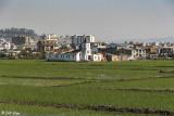 Rice Paddies, Antananarivo   1