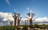 Baobab Trees, Mandrare Forest Lodge  11