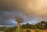 Baobab Trees, Mandrare Forest Lodge  6