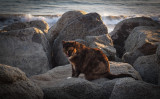 Cats on the Rocks