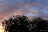 Day106_Sunrise_trees.jpg