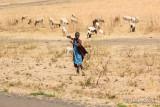 Jeune masaï gardant son troupeau