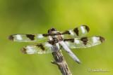 Amphibien-tortue-papillon - insecte