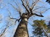 Corbett - Dalhousie Lakes Forest