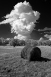 Hay Field & Cloud in Infrared