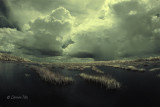 Afternoon Storm in Infrared.jpg